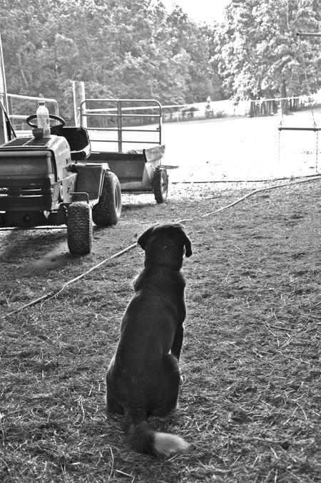 dogguardingthebarn-opt