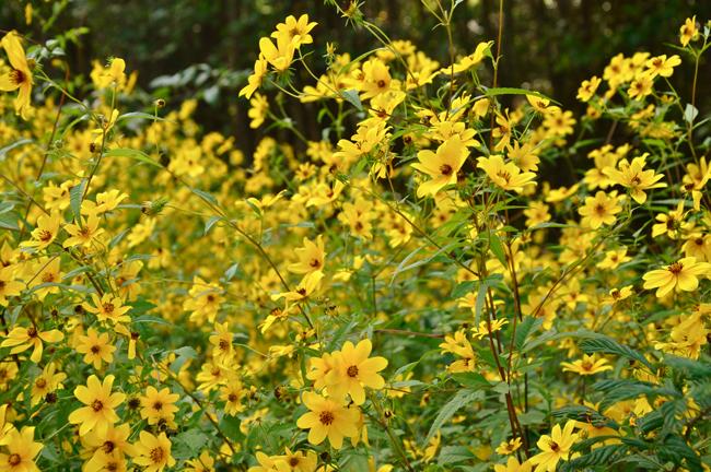 wildflowersroadsideSC-opt